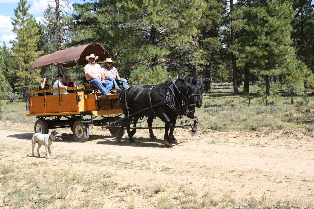 Ruby's Horseback Adventures - Wagon Rides