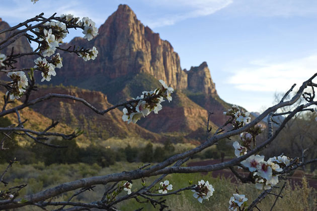 Zion in Springtime
