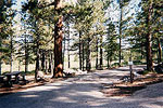 Spruces Campground