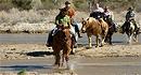 Arizona Horse Company