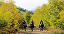 Daniels Summit Horseback Riding