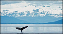 Expedition Trips - Alaska Cruises and Tours