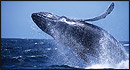 Stagnaro Charter Boats - Santa Cruz Whale Watching